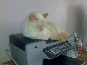 kot-na-drukarce